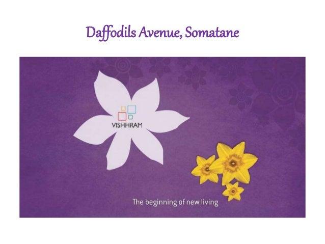 Daffodils Avenue, Somatane