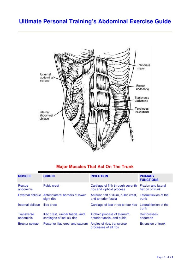 Ultimate Personal Training's Abdominal Exercise Guide                                  Major Muscles That Act On The Trunk...