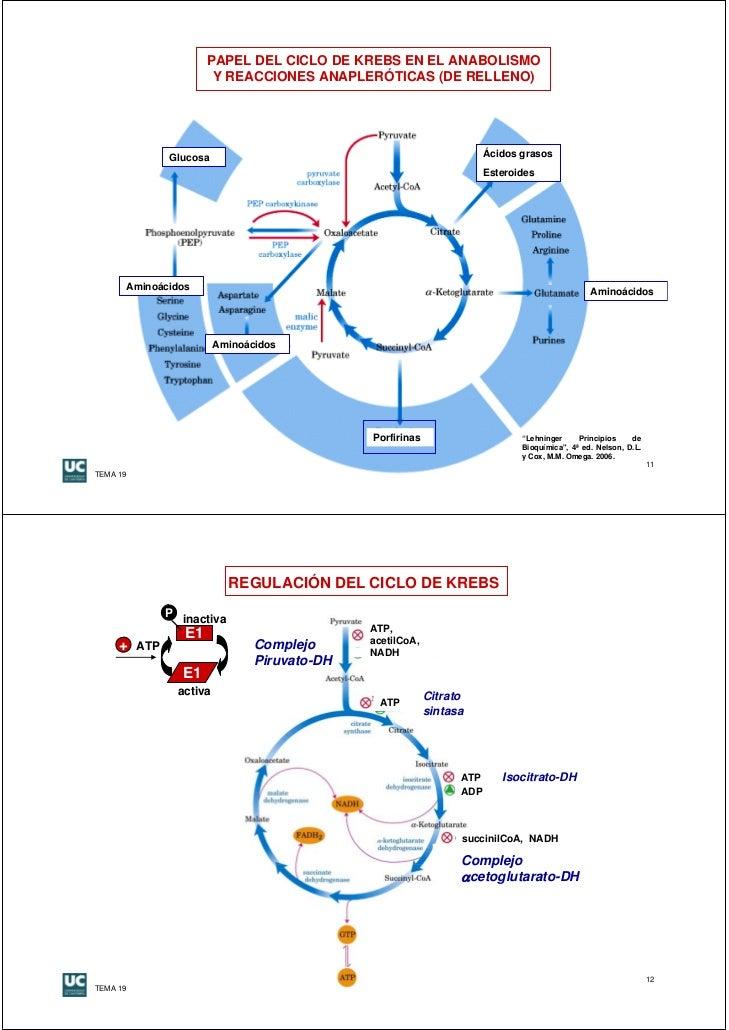 ruta anabolica de los lipidos