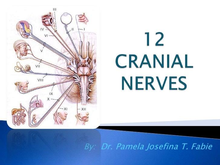 12 cranial nerves