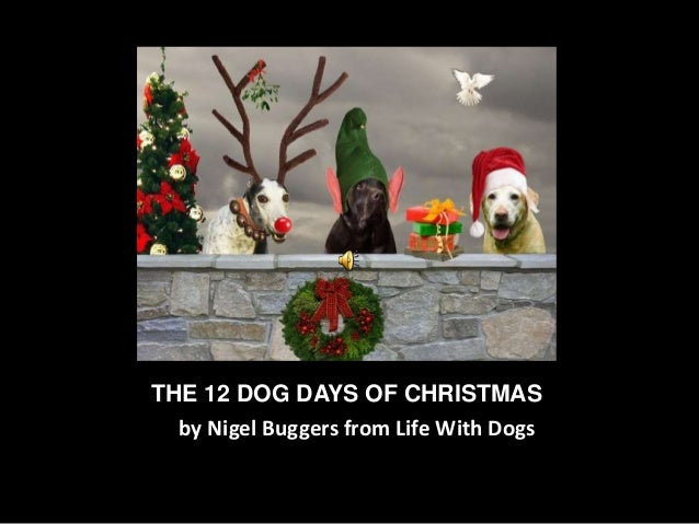 THE 12 DOG DAYS OF CHRISTMAS by Nigel Buggers from Life With Dogs