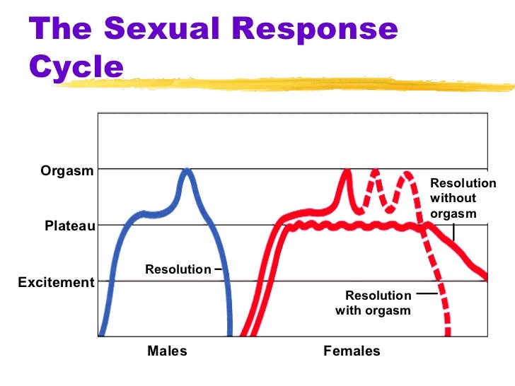 Male Sexual Arousal Stages