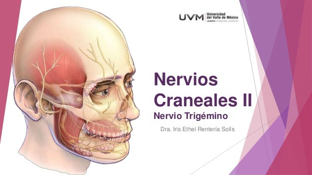 Uvm sistema nervioso sesion 12 pares craneales ii for 12 paredes craneales