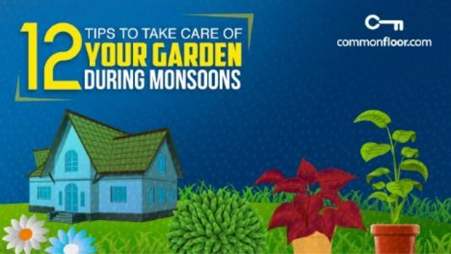 12 Tips To Take Care Of Your Garden During The Monsoon Season
