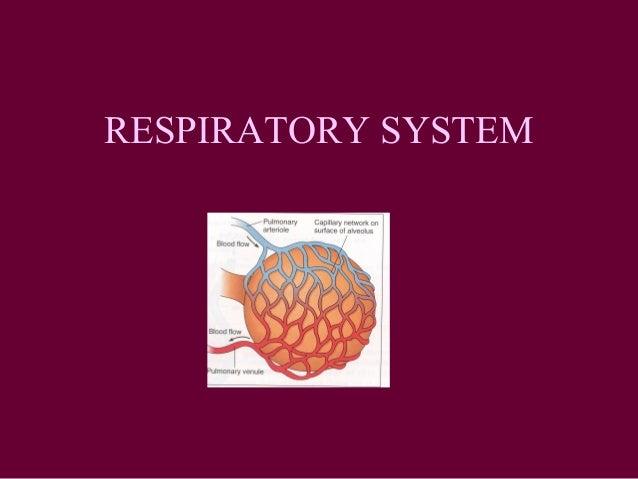 13. respiratory49