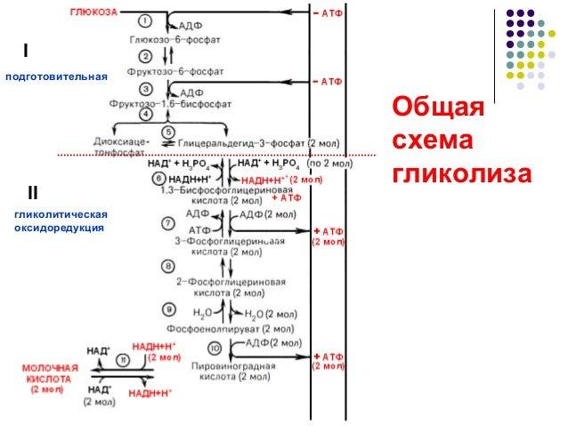 Общая схема гликолиза I