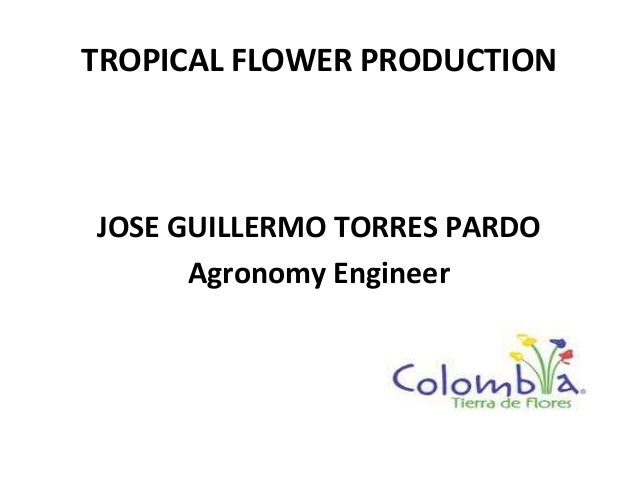 TROPICAL FLOWER PRODUCTION JOSE GUILLERMO TORRES PARDO Agronomy Engineer