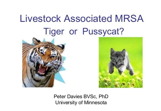 Dr. Peter Davies - Livestock Associated MRSA: Tiger or Pussycat?