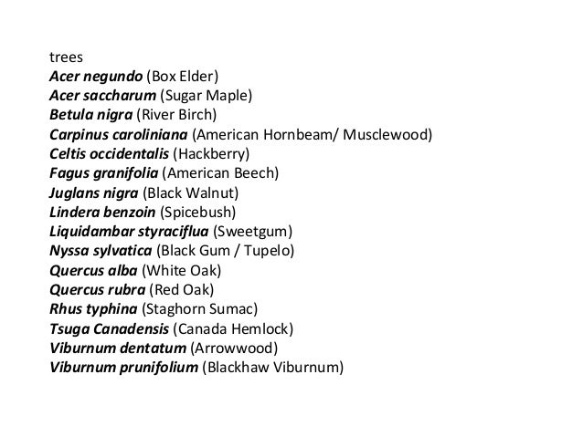130923 pu woody plant list 3 slides