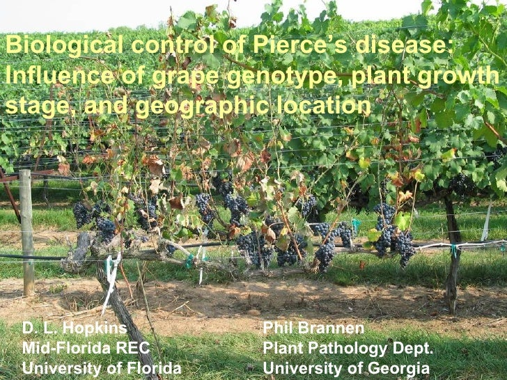 Biological control of Pierce's disease: Influence of grape genotype, plant growth stage, and geographic location D. L. Hop...