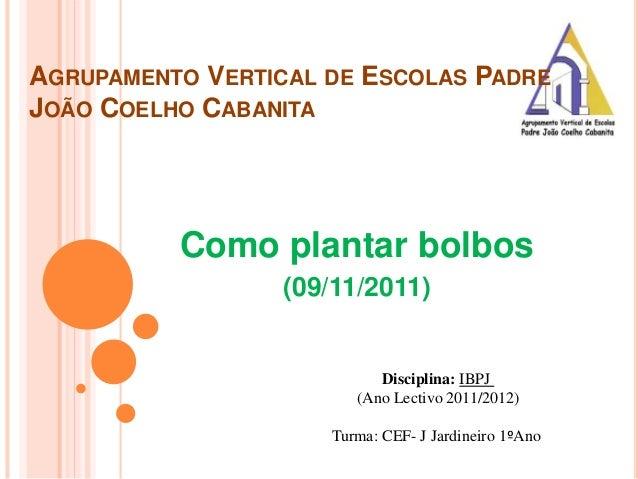 AGRUPAMENTO VERTICAL DE ESCOLAS PADRE JOÃO COELHO CABANITA Como plantar bolbos (09/11/2011) Disciplina: IBPJ (Ano Lectivo ...