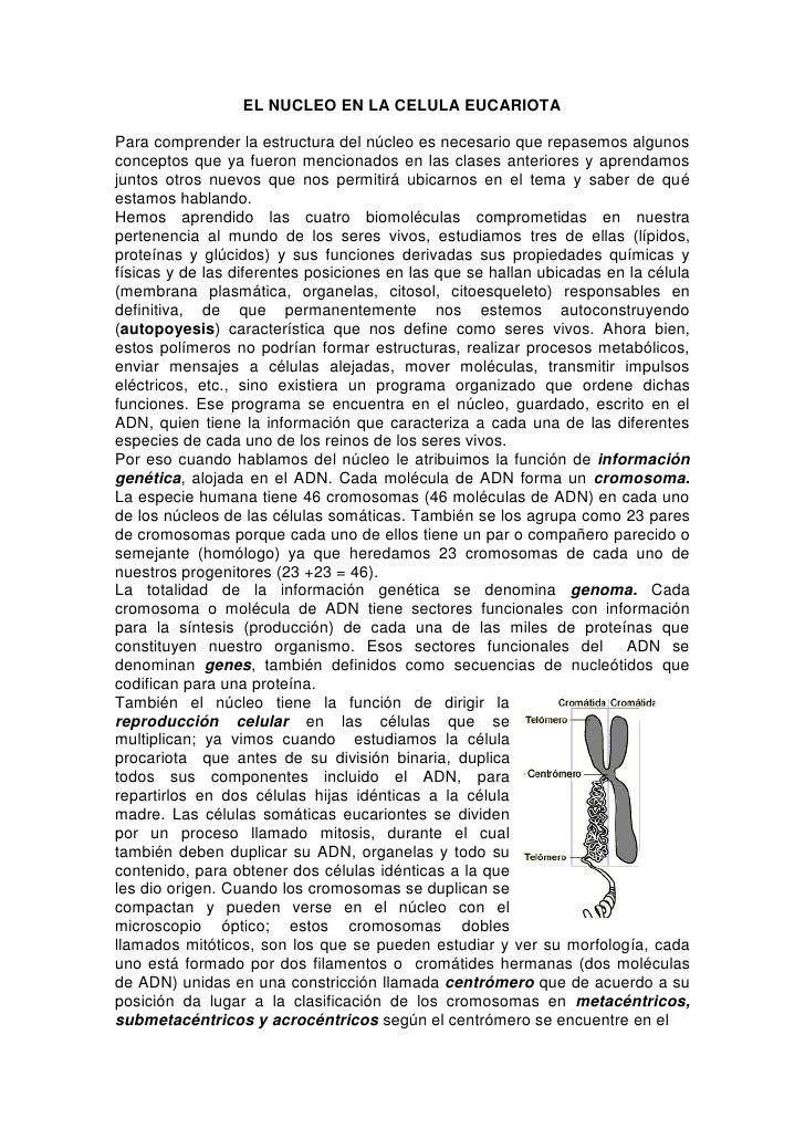 EL NUCLEO EN LA CELULA EUCARIOTAPara comprender la estructura del núcleo es necesario que repasemos algunosconceptos que y...