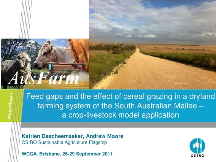 Feed gaps and the effect of cereal grazing in a dryland    farming system of the South Australian Mallee –           a cro...