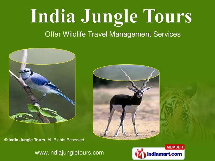 Offer Wildlife Travel Management Services© India Jungle Tours, All Rights Reserved               www.indiajungletours.com