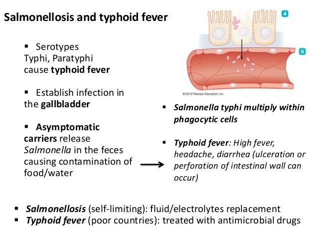 salmonella typhi typhoid fever Salmonella enterica serovar typhi, the cause of typhoid, is host restricted to humans s typhi has a monophyletic population structure, indicating that typhoid in humans is a relatively new disease.