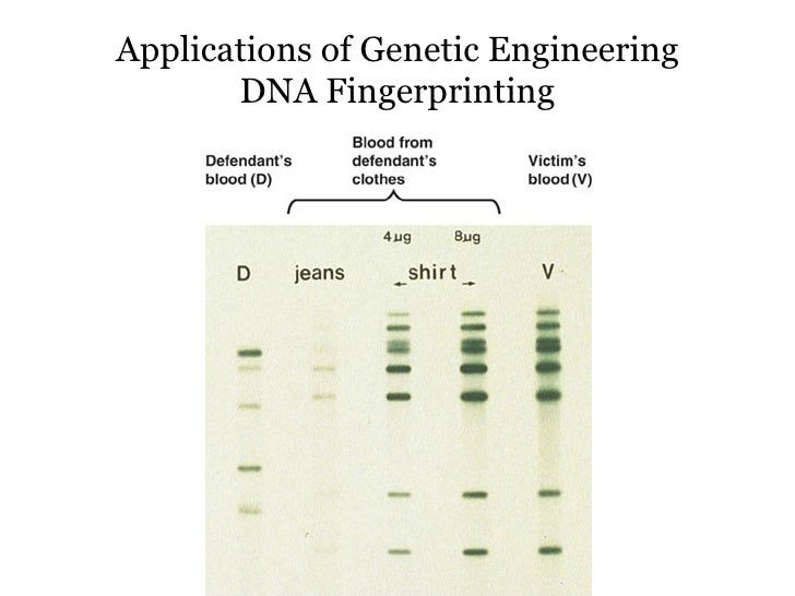 the tremendous applications of genetic engineering Genetic modification of human embryos of 'tremendous value,' say  provides  vast scope for applications in human disease and health and.