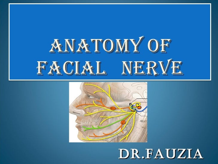 ANATOMY OF  FACIAL  NERVE DR.FAUZIA