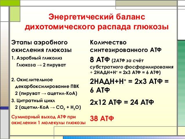 Аэробный гликолиз Глюкоза → 2