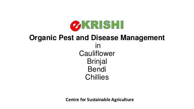 Organic Pest and Disease Management in Cauliflower Brinjal Bendi Chillies Centre for Sustainable Agriculture