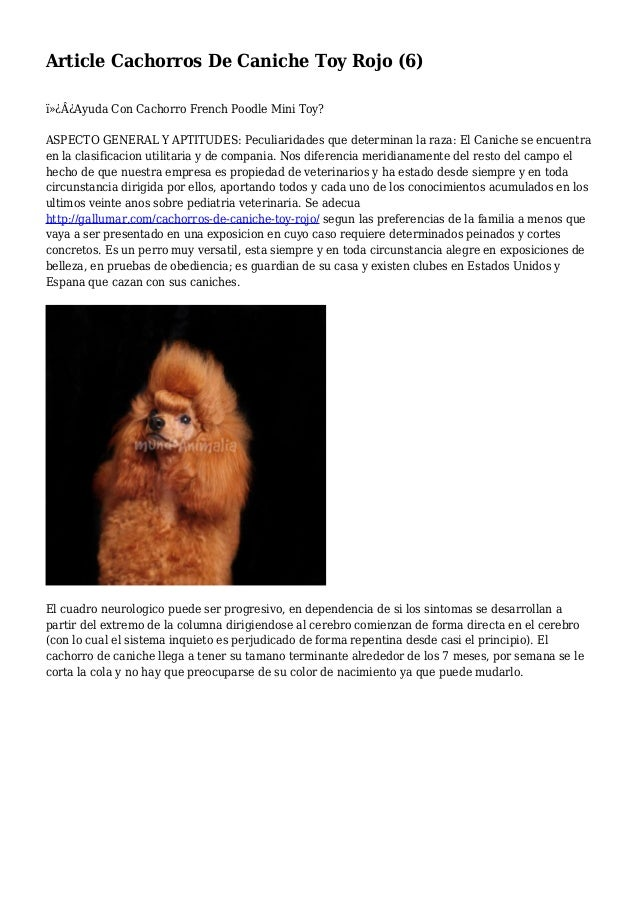 Article Cachorros De Caniche Toy Rojo (6) ¿Ayuda Con Cachorro French Poodle Mini Toy? ASPECTO GENERAL Y APTITUDES: Pec...