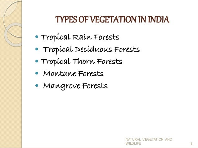 essay on natural vegetation and wildlife Wildlife conservation is a global concern as species and their habitats face an increasing number of threats, many of which are caused by human activities.