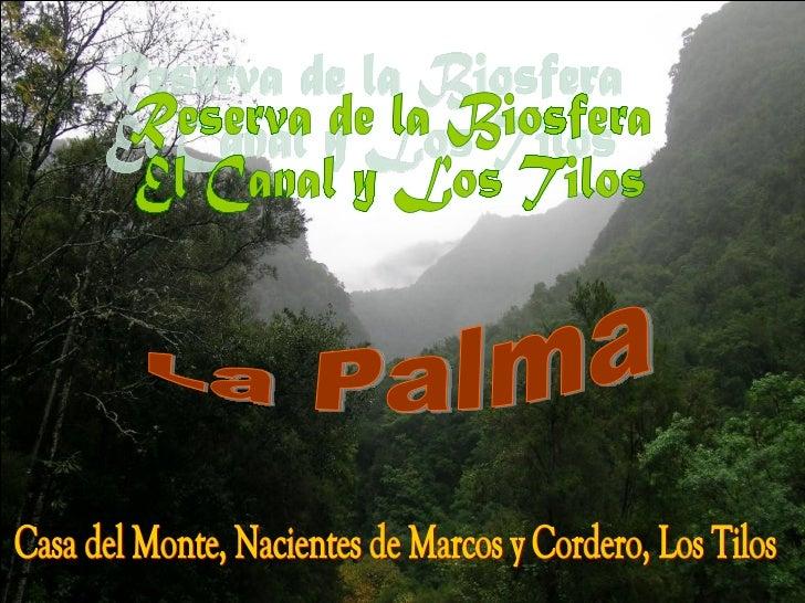 Reserva de la Biosfera El Canal y Los Tilos La Palma Casa del Monte, Nacientes de Marcos y Cordero, Los Tilos