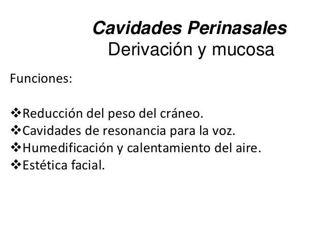 Cavidades Perinasales Derivación y mucosa Funciones: Reducción del peso del cráneo. Cavidades de resonancia para la voz....