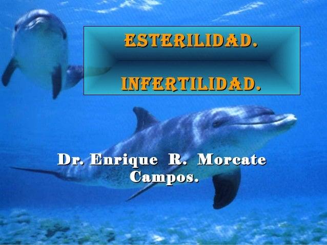 EstErilidad.EstErilidad. infErtilidad.infErtilidad. Dr. Enrique R. MorcateDr. Enrique R. Morcate Campos.Campos.