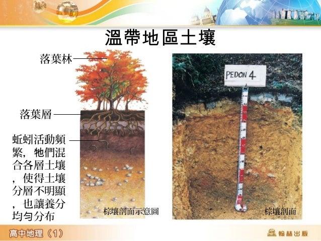 草原黑土 • 草類生命周期短 , 地 下根系龐大  提供土壤養分 整體土壤沃度高