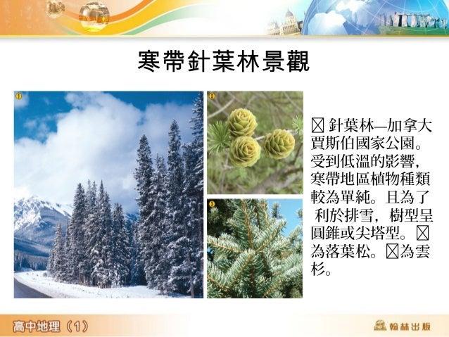 冬季時,在針葉 林過冬的馴鹿