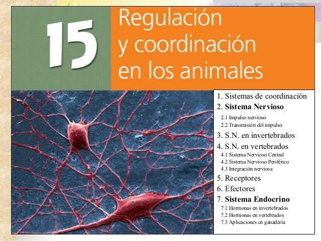 15   regulación y coordinación en animales i