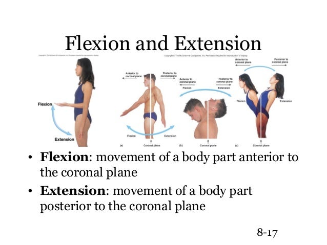 Synovial joint, Extensions and Bending on Pinterest