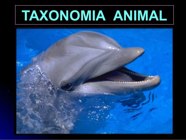 TAXONOMIA ANIMALANIMAL