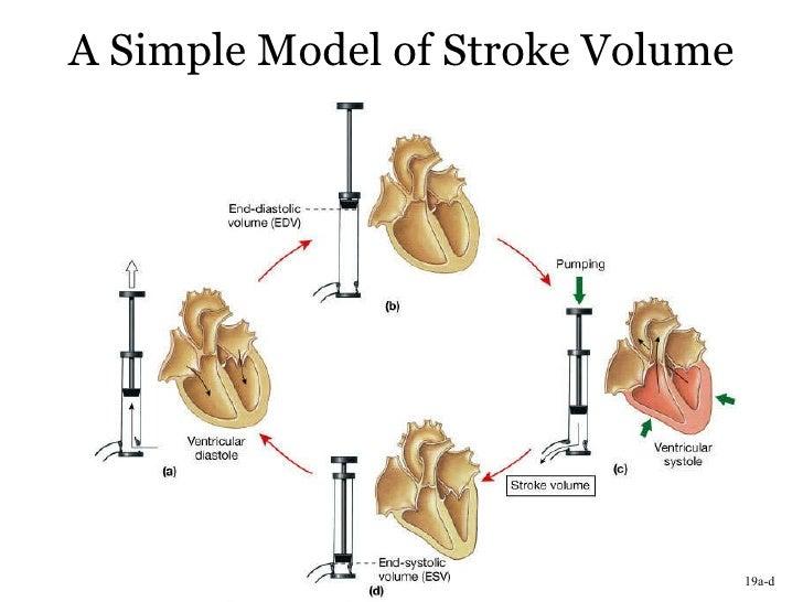 Stroke Volume Equation Related Keywords Stroke Volume