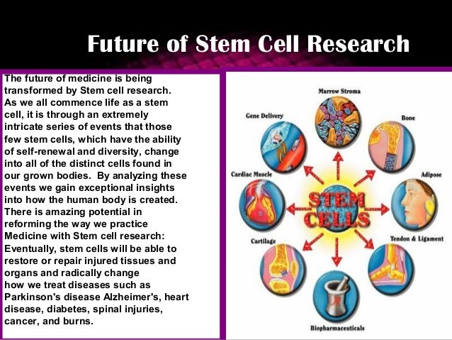 future posibilites of stem cell research A number of current stem cell treatments derived from stem cell research to five billion heart cells future stem cell treatments will require.