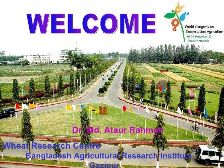 Rice straw mulching and nitrogen requirement to improve productivity of no-till wheat following rice in Bangladesh. Ataur Rahman