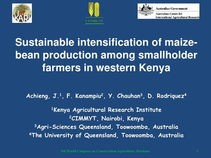 Sustainable intensification of maize-bean production among smallholder     farmers in western Kenya  Achieng, J.1, F. Kana...