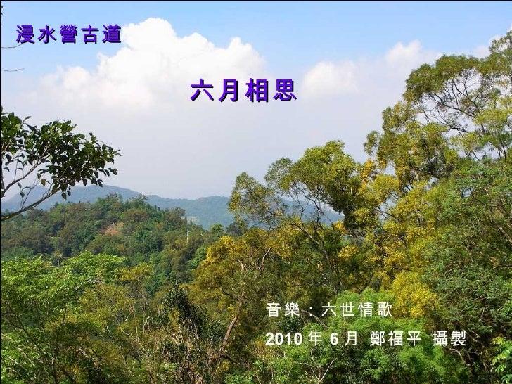 Taiwan Acacia in Full Blossom