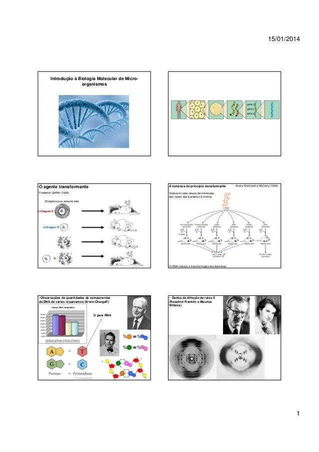 15/01/2014  Introdução à Biologia Molecular de Microorganismos  O agente transformante  A natureza do princípio transforma...