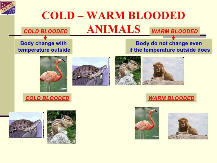 what is the difference between cold blooded and warm blooded anim ...