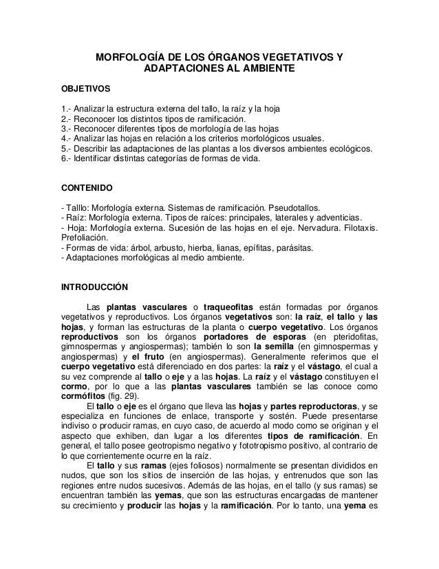 MORFOLOGÍA DE LOS ÓRGANOS VEGETATIVOS Y ADAPTACIONES AL AMBIENTE OBJETIVOS 1.- Analizar la estructura externa del tallo, l...