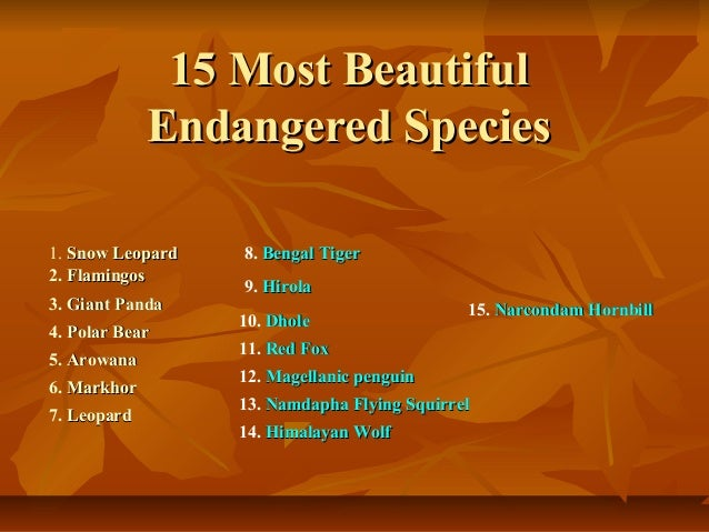 15 most beautiful endangered species