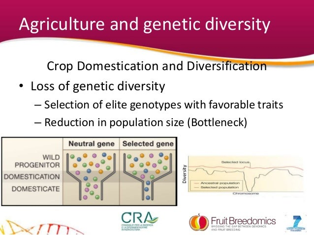 What is genetic diversity?