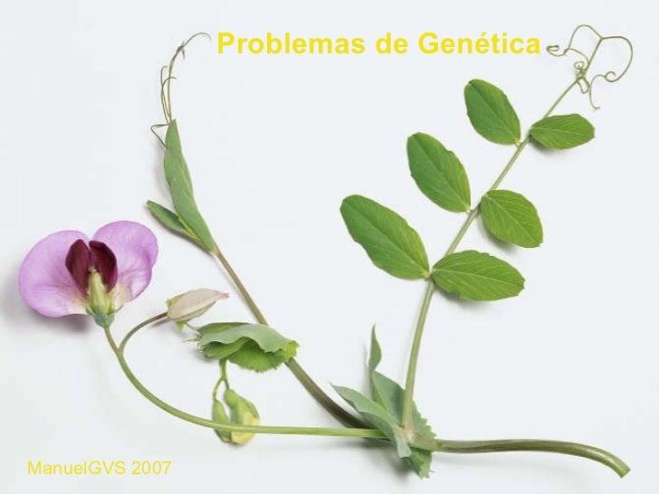 15 problemas genética resueltos y explicados