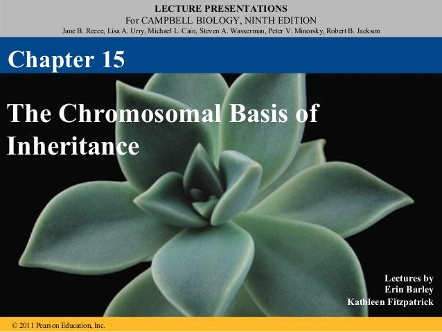 15 the chromosomal basis of inheritance