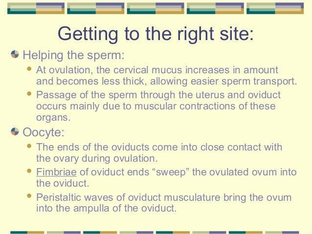 Presentaion on ovaries