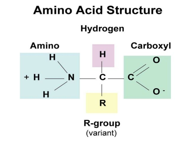 Proteins Amino Group Sketch