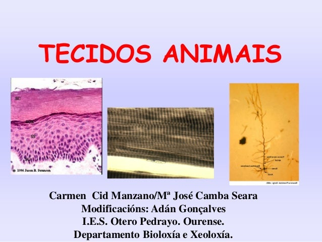TECIDOS ANIMAIS  Carmen Cid Manzano/Mª José Camba Seara Modificacións: Adán Gonçalves I.E.S. Otero Pedrayo. Ourense. Depar...