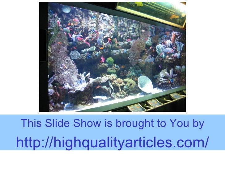 Visit The Aquarium Of The Pacific Virtually