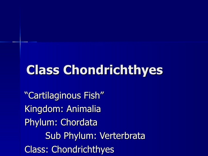17. Class Chondrichthyes Notes